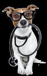 cane dottore