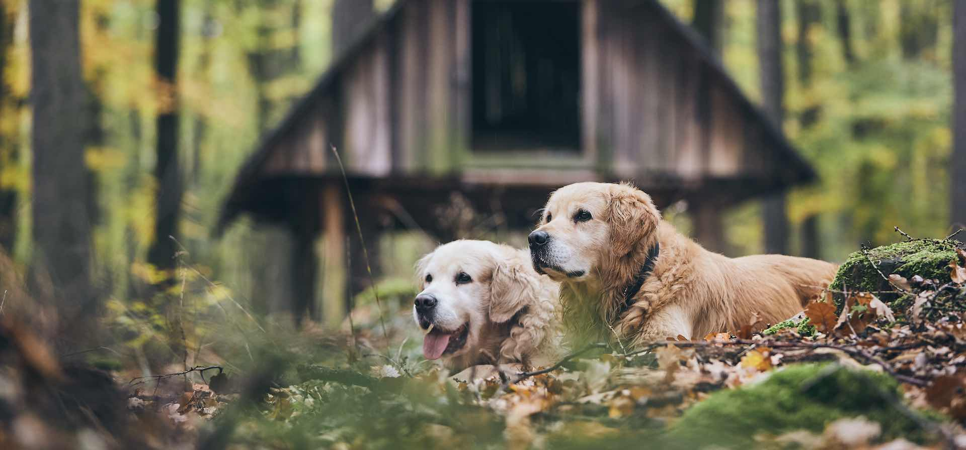 incontri doggami