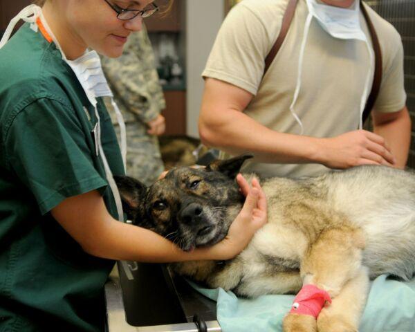 Primo soccorso per cani in attesa del veterinario